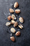 Fresh seafood. Scallops. Fresh seafood on stone table. Scallops. Top view stock image