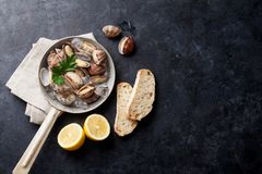 Fresh seafood. Scallops. Fresh seafood on stone table. Scallops. Top view with copy space Stock Images