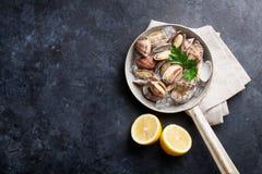 Fresh seafood. Scallops Stock Image
