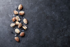 Fresh seafood. Scallops Royalty Free Stock Images
