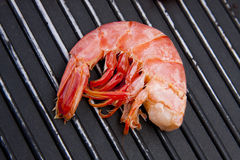 Fresh seafood, shrimp Royalty Free Stock Image