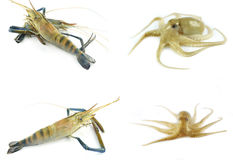Fresh seafood - shrimp and squid. Fresh raw seafood - shrimp and squid Royalty Free Stock Photography