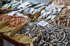 Fresh seafood stall from aegean sea.