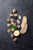 Fresh seafood on stone table. Scallops Royalty Free Stock Photos