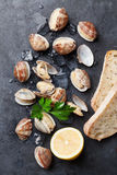 Fresh seafood on stone table. Scallops Royalty Free Stock Photography