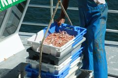 Fresh Seafood unloaded by a Fisherman Royalty Free Stock Photo