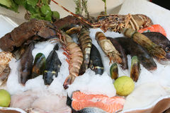 Fresh seafoods. Lay on an ice Stock Photos