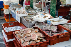 Fresh seafoods and fishes. This morning artisanal fishing available here in Dieppe, France Stock Photo
