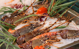 Fresh seafoods lay on an ice royalty free stock images