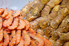Fresh seafoods Stock Images