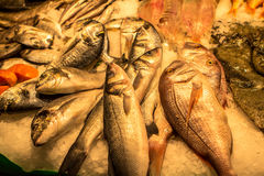 Fresh seafoods at the market in Barcelona. Spain Stock Images
