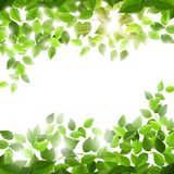 Fresh season branches with green leaves. EPS 10. Fresh season branches with green leaves with sun effect. EPS 10 vector file royalty free illustration
