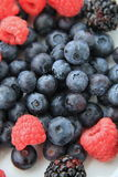 Fresh seasonal berries for breakfast Royalty Free Stock Image