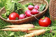 Fresh seasonal organic vegetables. Gardening-vegetables-organic Royalty Free Stock Images