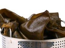Fresh seaweed Royalty Free Stock Photo
