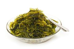 Fresh seaweed Stock Photos