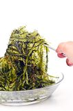 Fresh seaweed Royalty Free Stock Images