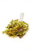 Fresh seaweed Royalty Free Stock Image