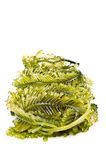 Fresh seaweed Stock Images
