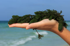 Fresh seaweed. A handful of fresh seaweed against the sea background Royalty Free Stock Image