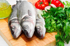 Fresh see bass with some ingredients Stock Images