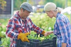 Fresh seedlings Royalty Free Stock Images