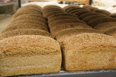 Fresh Sesame Loaves 2 Royalty Free Stock Photo
