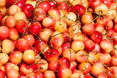 Fresh set of Red and yellow cherries Stock Photo