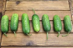 Fresh Seven Cucumbers On The Rough Wood Background. Fresh Seven Cucumbers In A Row On The Rough Rustic Wood Tabletop Royalty Free Stock Image