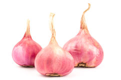 Fresh shallot Royalty Free Stock Photography