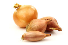 Fresh shallots and an onion Royalty Free Stock Photo