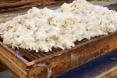 Fresh sheared wool Stock Image