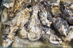 Fresh shell oysters in a seafood market Royalty Free Stock Photos