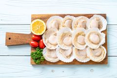 Fresh shell scallop. On wood board stock photography