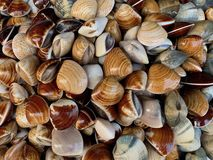 Fresh Shellfish as natural wallpaper and background, seafood. Ingredient fisherman market royalty free stock photography