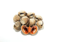 Fresh Shellfish Blood Cockles. On white Royalty Free Stock Photography