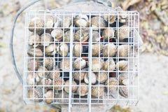 Fresh shellfish on charcoal grill Royalty Free Stock Photo