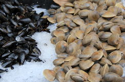 Fresh shellfish on crushed ice at the local fish market Stock Photography