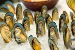 Fresh shellfish on ice royalty free stock images