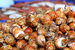 Fresh shellfish at the market Royalty Free Stock Image