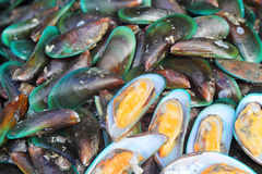 Fresh shellfish at the market Stock Image