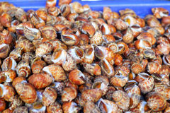 Fresh shellfish at the market Stock Image
