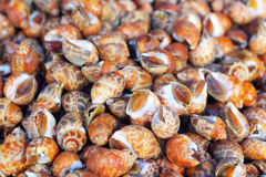 Fresh shellfish at the market Royalty Free Stock Image
