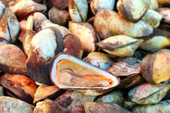 Fresh shellfish in market. Fresh shellfish for sale at fish market in Thailand Stock Image