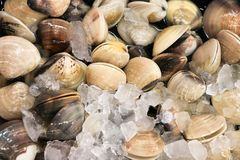 Fresh shellfish from the sea on a food stall Royalty Free Stock Images