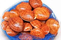 Fresh shells Royalty Free Stock Photo