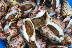 Fresh Shells for restaurant Royalty Free Stock Images