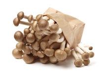 Fresh shiitake mushroom. Isolated on white background Royalty Free Stock Photography