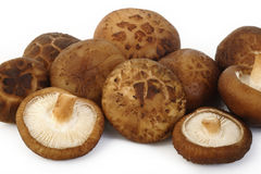 Fresh shiitake mushroom isolated Stock Photos