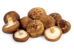 Fresh shiitake mushroom isolated Royalty Free Stock Photos